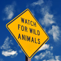 Watch for wild animals
